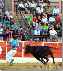 Domingo de recortadores en tierras turolenses.